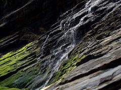 IMG_1156 (hiway99w) Tags: statepark oregon spring hiking waterfalls oregoncoast oswaldweststatepark capefalcon shortsandsbeach tillamookcounty oregoncoasttrail blumenthalfalls