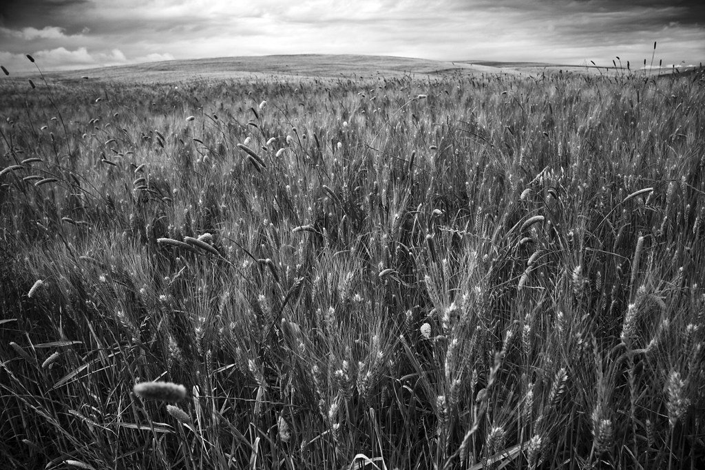 In the fields (b/w)