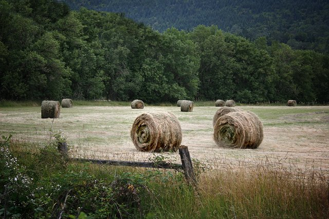 Summer Harvest - Hay Bales