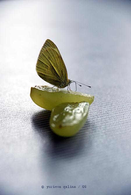 butterfly's breakfast