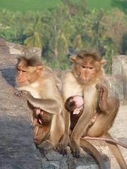 Hanuman Temple - Hampi