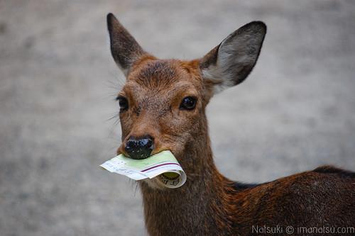 Día 10: Nara by nyatsuki
