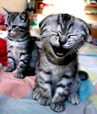kittens[1]