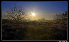 Sunshine (J. van de Pas) Tags: morning trees light en sun holland tree nature netherlands sunshine sunrise landscape dunes nederland natuur strings streams op goodmorning duinen brabant loon landschap zand noord drunen drunense loonse goldstaraward