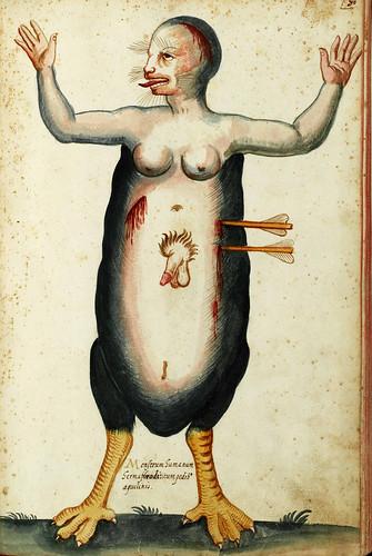 Monstrum HumanumLe tavole acquerellate di Ulisse Aldrovandi http://www.filosofia.unibo.it/aldrovandi/pinakesweb/main.asp?language=it by renzodionigi