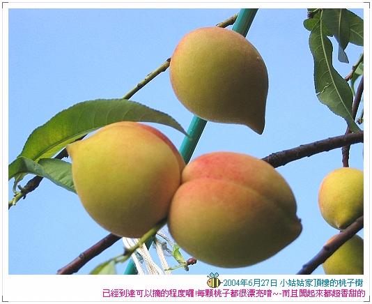 04.06.27 小姑姑家的桃子樹 (1)