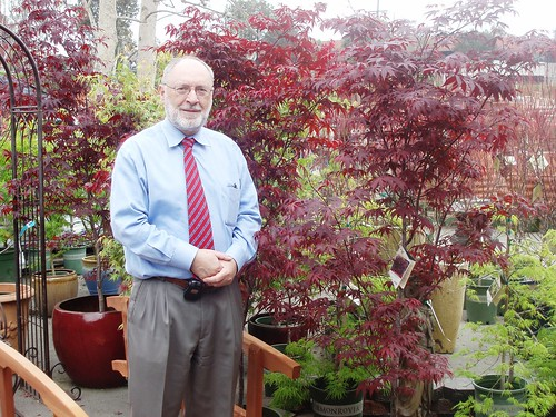 Japanese Maple tree winner