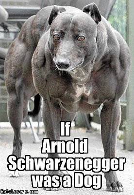 If Arnold Schwarzenegger was a Dog - LOLDogs