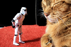 Sleeping again !? (Stfan) Tags: cat canon toy actionfigure eos starwars chat maya stormtroopers figure stormtrooper figurine jouet hasbro project365 450d 365toyproject 3652009 stormtroopers365 iberpress