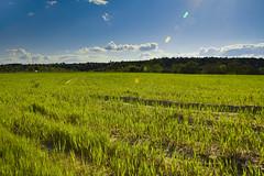 086:365 Green field