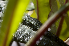 (Elinalipona) Tags: macro green beautiful drops russia april yaroslavl  macrorings  potflowers  pentaxk100dsuper