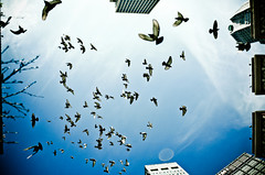 pigeonswarm (Andrew Morrell Photography) Tags: city urban pittsburgh pigeon birdswarm