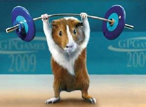 generatoare-hamsteri