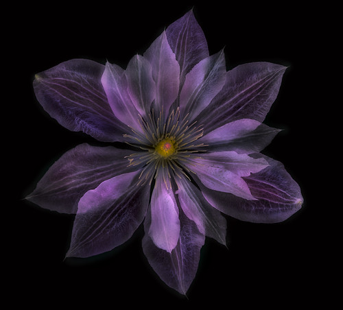 Clematis to the Dark Side