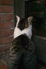 名物ネコちゃんをDP2で撮る