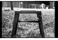 horse_841 (meilev) Tags: california iso800 olympusom10 willits pulled fujineopan1600 bwfilm diyprocessing