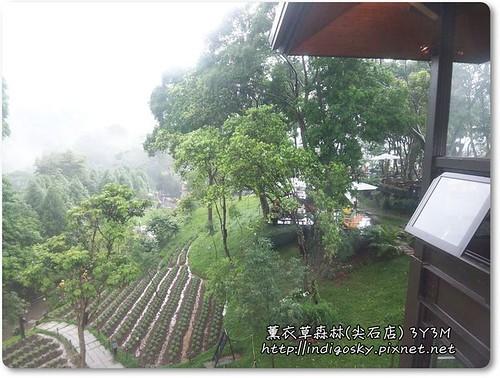 新竹薰衣草森林(尖石)-116