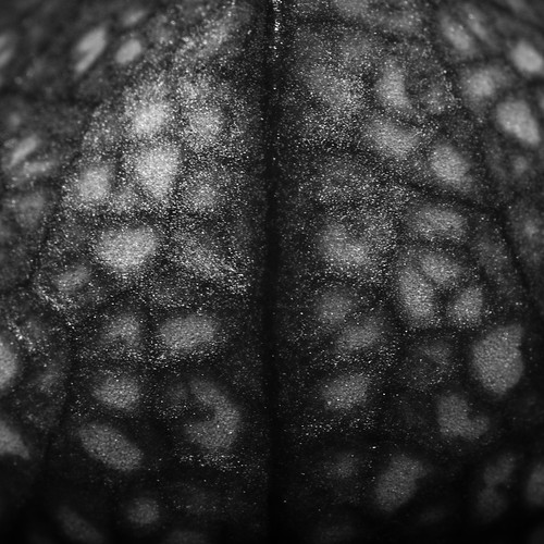 Sarracenia Psittacina: Brain