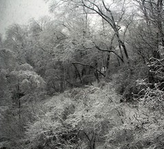 Achromatic (gonisj) Tags: trees winter blackandwhite snow backyard colorless
