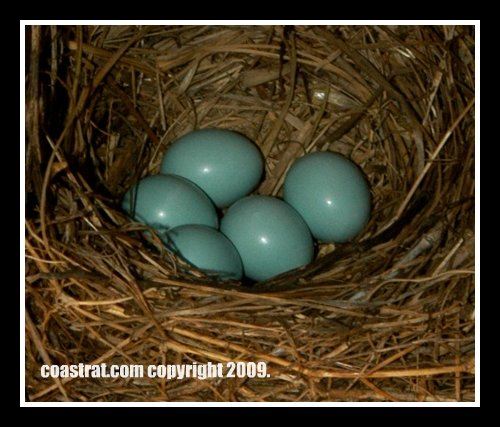 DSC_0068ABC-Box-4-5eggs