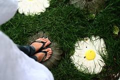 oh, you pretty things! (sarahblackbird) Tags: joopessoa jardim ps rebelxt paraba casadegian