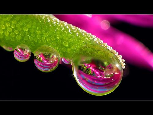 Wassertropfen an Eisblume