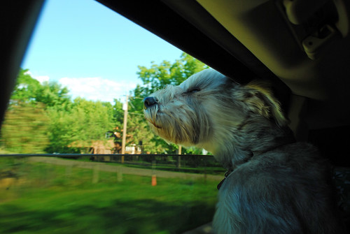 harpo head out window