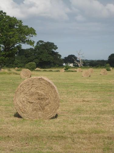 Wimborne hay bales 3