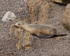 Sick Sea Lion? Photo