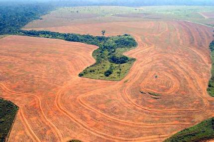 amazon agricultural clearing