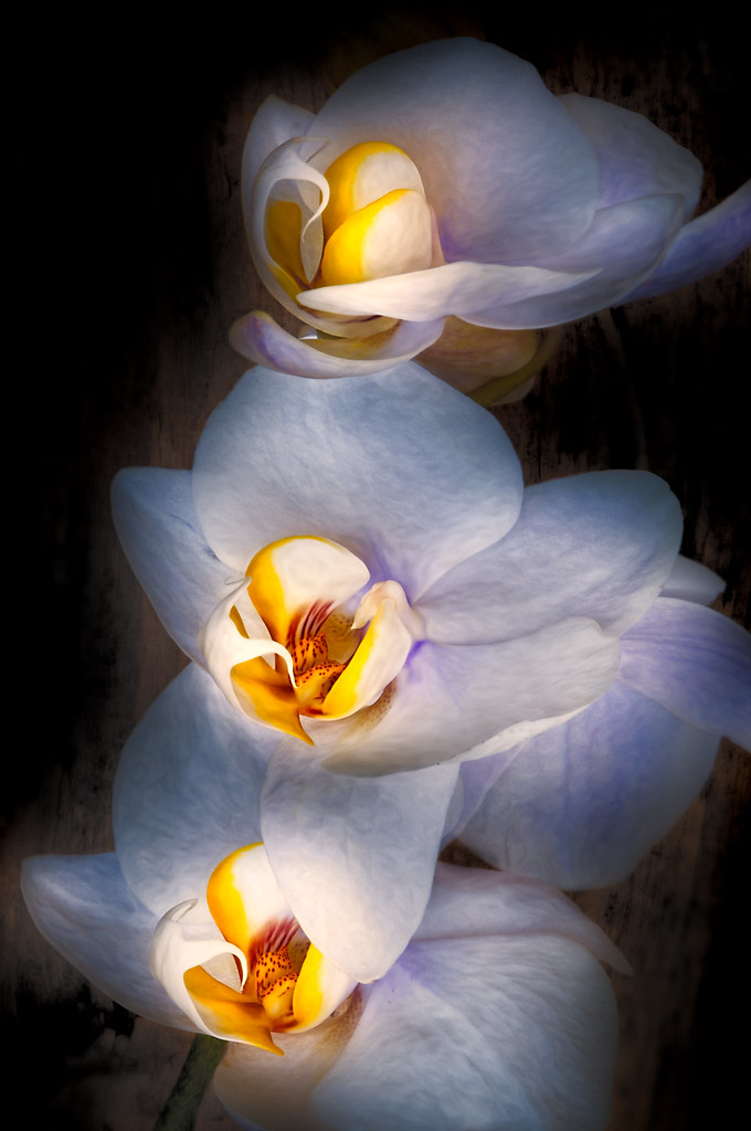 Orchid © Harold Davis
