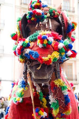 Mascleta-Horse