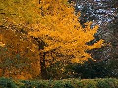 autumn... in ferrara