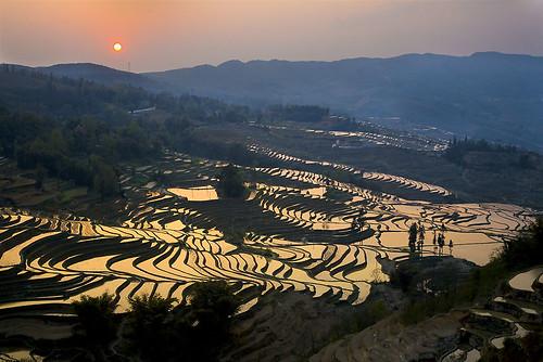 Terraced Rice Field of Yua Yang 元阳