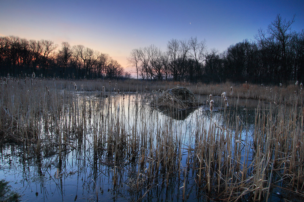 Marsh By Oakton Community College, Cook County, Illinois