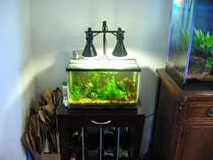 New nano light (octopus.gallery) Tags: fish diy aquaria plantedtank newlight nanotank ikeahack