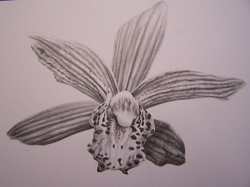 Orchid in Pencil 2