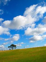 A Sideways View from Knole (antonychammond) Tags: uk blue england sky tree kent day cloudy britain thebest sevenoaks knole kartpostal abigfave skytheme flickraward firsttheearth citrit theperfectphotographer goldstaraward winnr landscapedreams goldenheartaward lesamisdupetitprince mostbeautifulpicturembpictures knolehistorichousedeerpark skyeciel