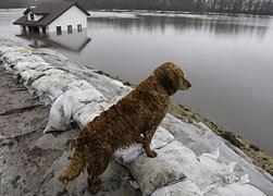 Kinship Circle - 2009-03-27 - Help Animals In North Dakota 01 by smiteme