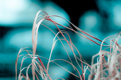 THIS IS NOT MY BEAUTIFUL HOUSE (harold.lloyd) Tags: fountain grass hair bokeh icecube davidbyrne hmy hmb straightouttacompton eazye mcren drdre rly mondayblues mmmyay mondaynotblue christopherwalkenproducing asupergroupfromhell alsoliivngherenao itslikeasupergroup moarcowbell seroooleeeeeun
