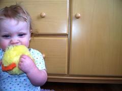 Loving her stuffed chick (Ludeman99) Tags: eowynlouisebitner