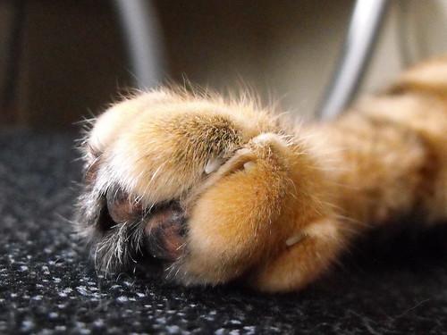 Nina-toes