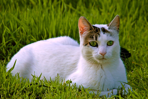 White Spring · Cat on grass