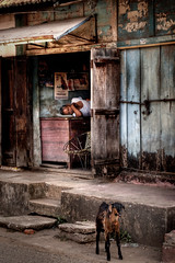 Wood Street (Andy Bracey -) Tags: travel india sleep goat kerala cochin hdr fortcochin photomatix bracey aplusphoto andybracey