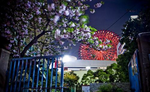 R0014870 : 夜桜日和 -Sakura2009 #36-