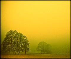 Kaltenbach - foggy morning (NPPhotographie) Tags: morning sun mist tree art nature fog sunrise germany landscape dust oberberg mystic abigfave platinumphoto topofthefog theunforgettablepictures goldstaraward artofimages bestcaptureaoi creatigve bestofmywinners