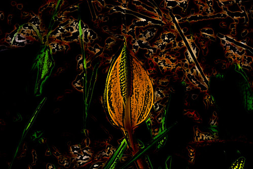 1212 Skunk Cabbage Bar Art