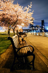 more introspection under the cherry trees... by night (manyfires) Tags: longexposure selfportrait film me night oregon self bench portland spring pacificnorthwest pdx steelbridge cherrytrees waterfrontpark velvia50 nikonfm