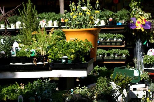 One Pot Spring Garden
