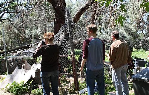 Elise, Garrett & Hank at rooster pen